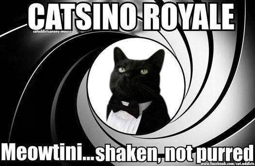 Pussy Bond