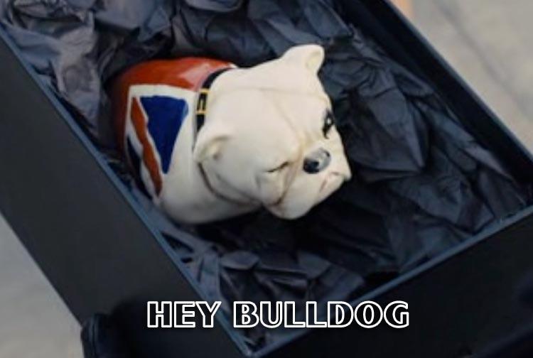 hey_bulldog.jpg